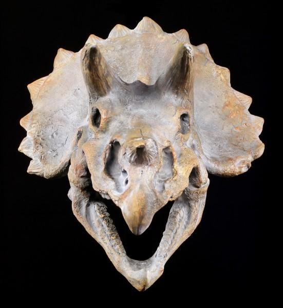 Wandrelief - Dinosaurier Schädel - Triceratops