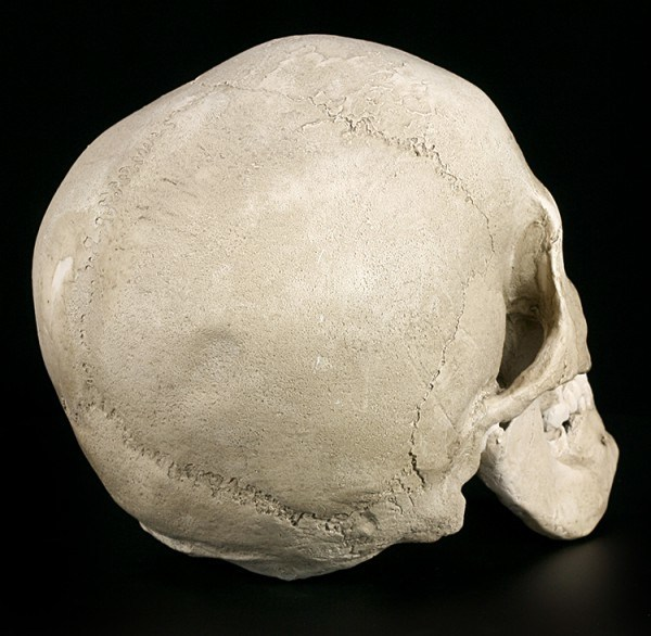 Human Male Skull Replica with Jaw - Ragna