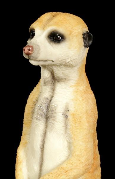 Meerkat Figurine with Baby