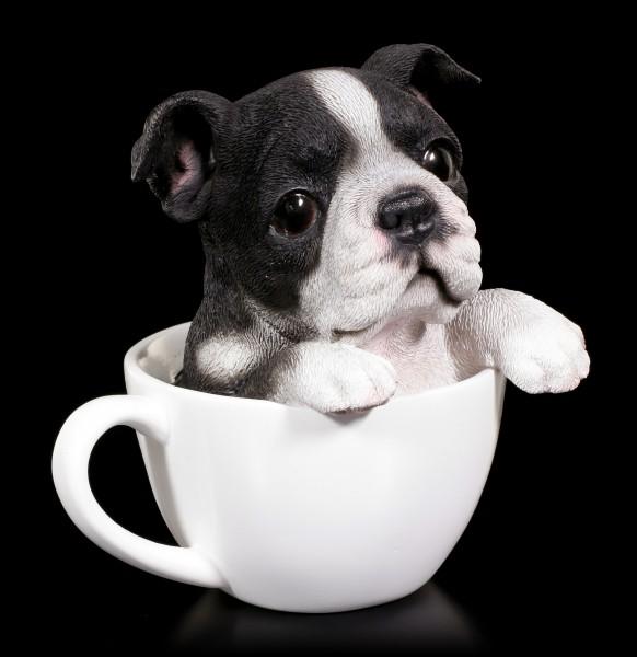 Hund in Tasse - Boston Terrier Welpe