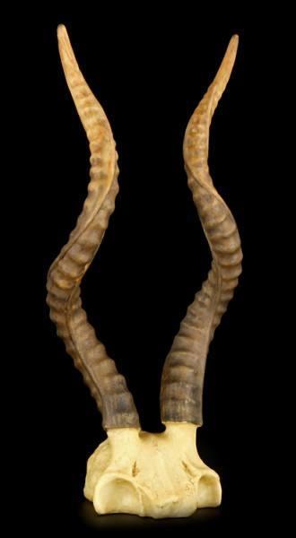 Totenkopf - Kudu mit Hörnern