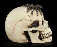 Totenkopf mit Spinne