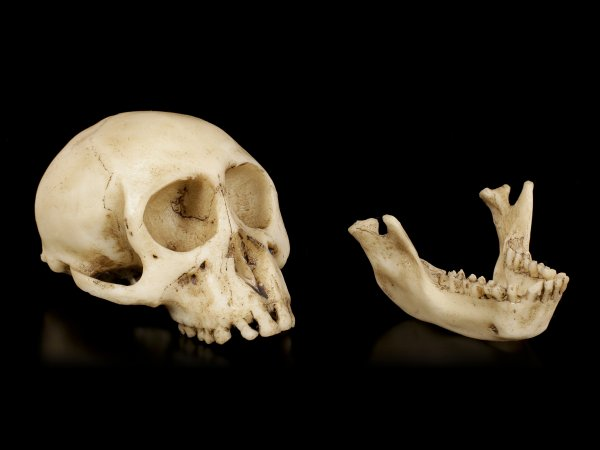Monkey Skull with moveable Jaw