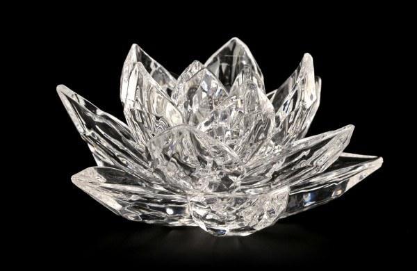 Acrylglas Blume - Wasserlilie