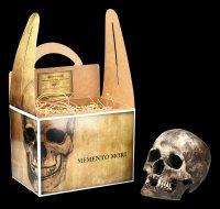Famale Skull Replica - Sagus with Mandible - Dark