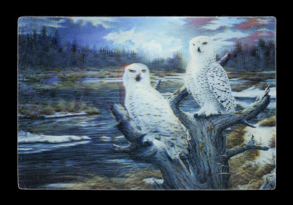3D Postcard - Snow Owls