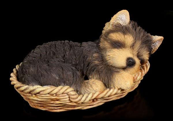 Hund in Körbchen Figur - Yorkshire Terrier