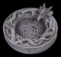 Drachenascher