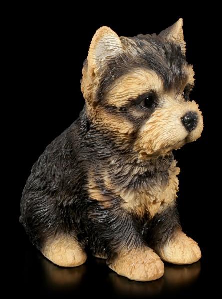Hunde Welpen Figur - Yorkshire Terrier