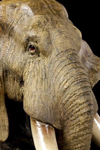 Large Elephant Head Buste - Steppe Giant