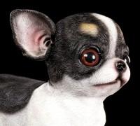 Gartenfigur Hund - Chihuahua Welpe