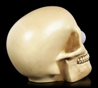 Skull with Rolling Eyes - Wilfried large