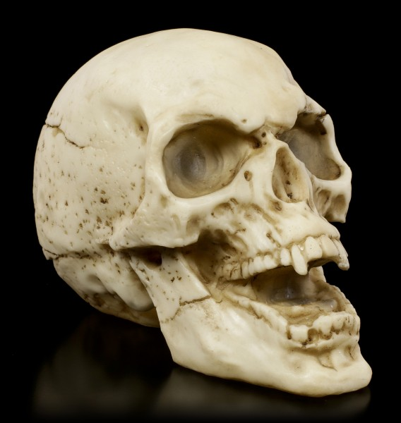 Vampire Skull with open Mouth