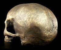 Skull without Mandible - Antique gold colored