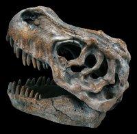 Tyrannosaurus Rex Skull - small
