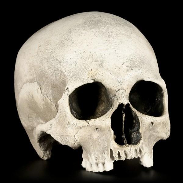 Totenkopf Replikat Frau - Sagus - Menschen Schädel