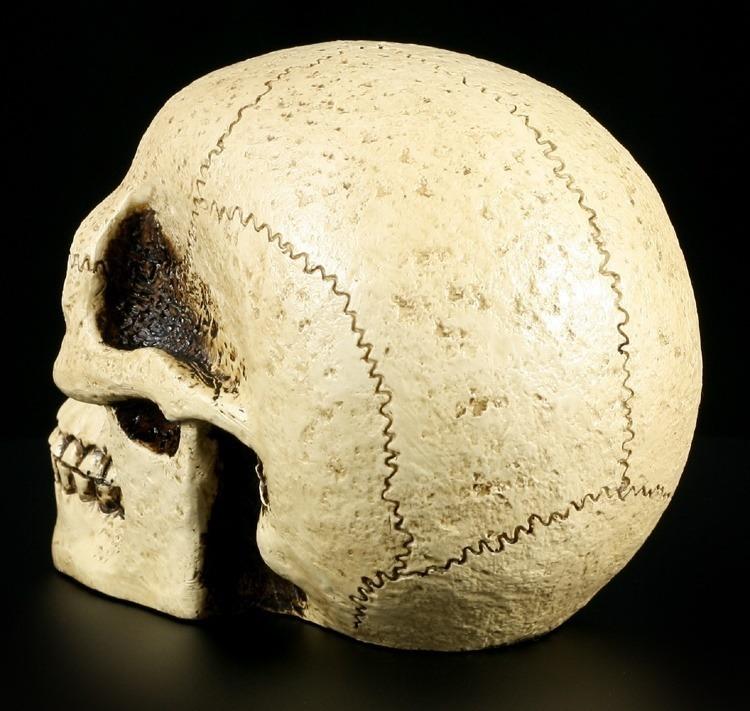 totenkopf menschlich mensch sch del figur deko totensch del skull ebay. Black Bedroom Furniture Sets. Home Design Ideas