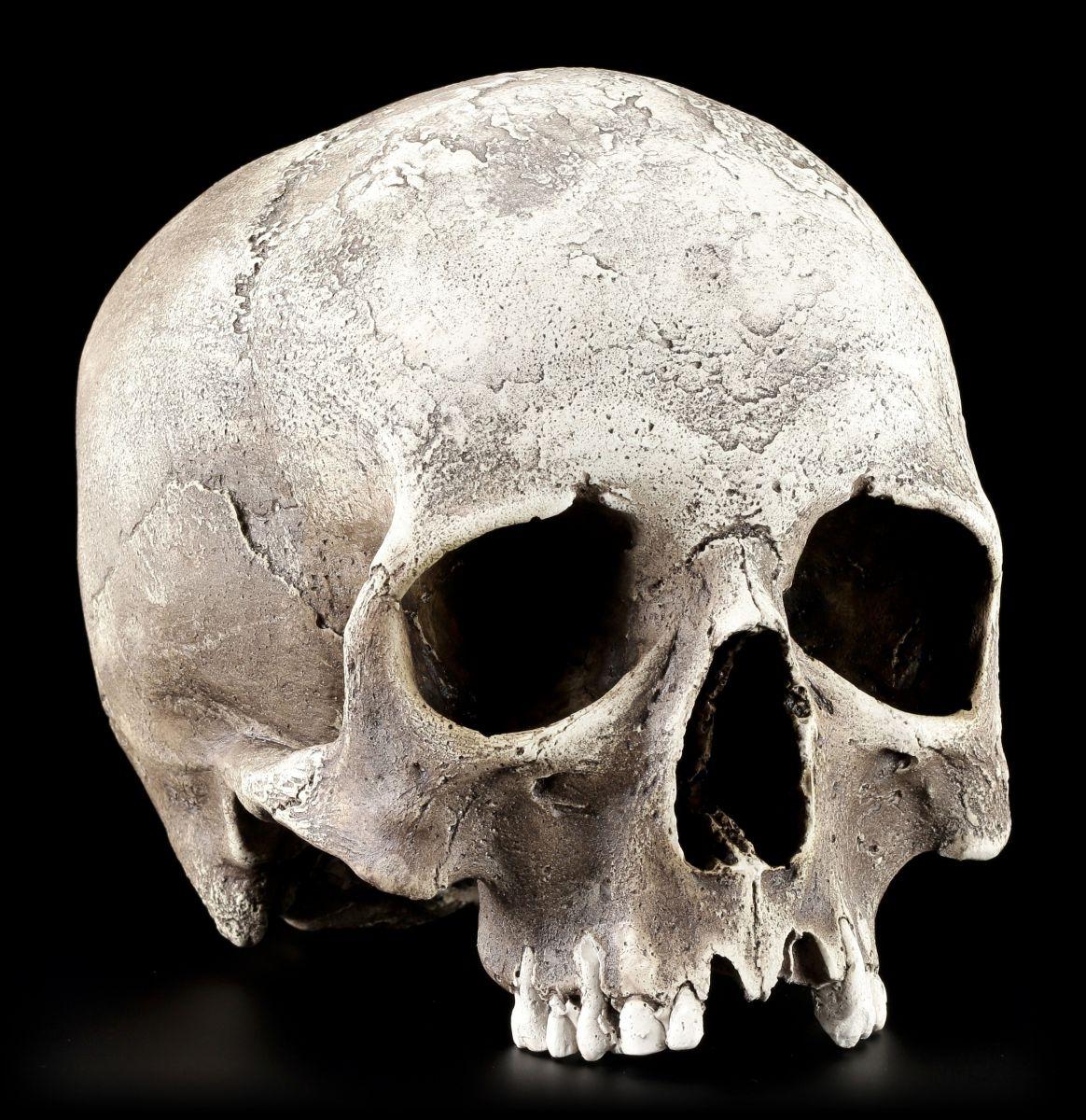 Unterkiefer anatomisch lebensecht Gothik Totenkopf Schädel Totenschädel