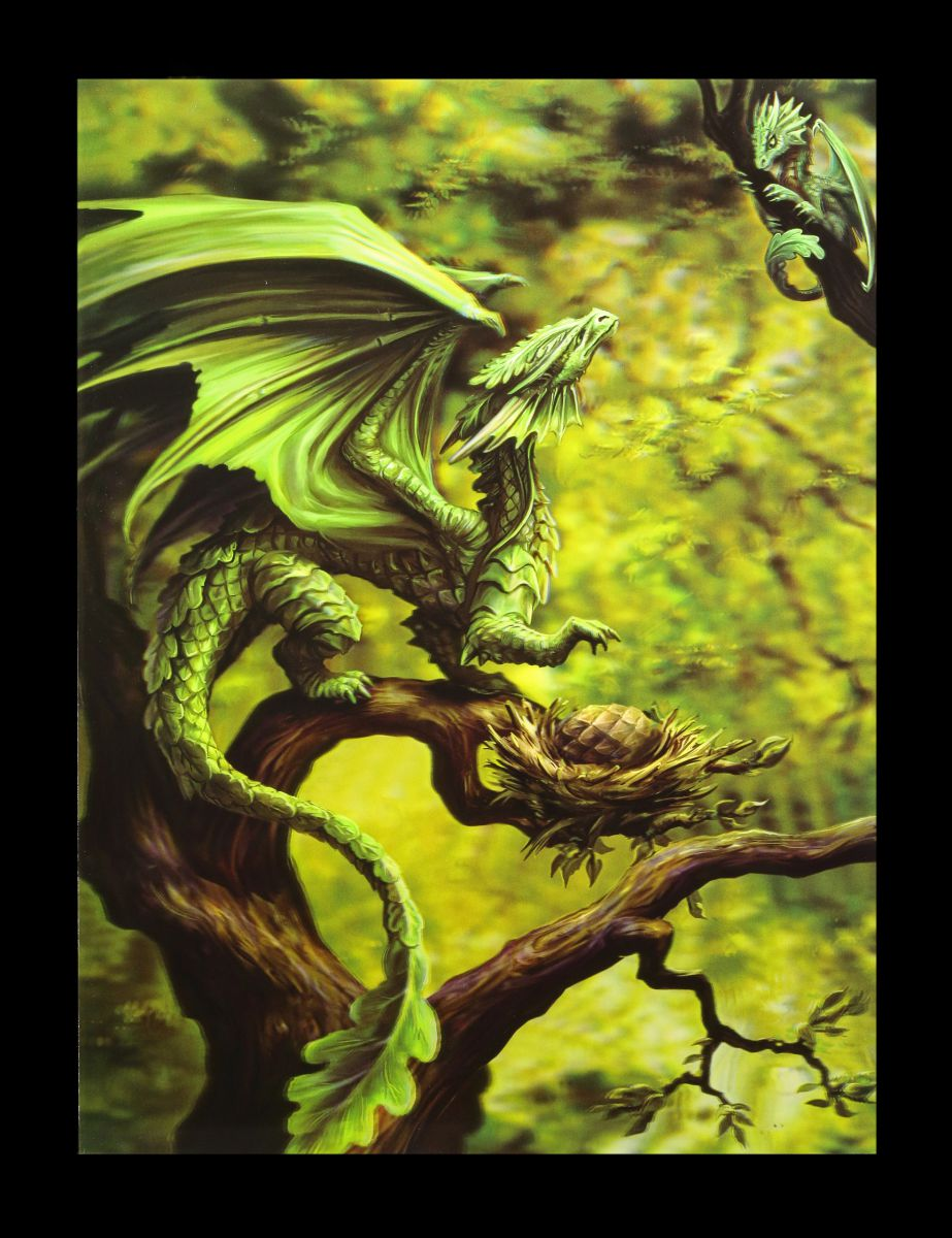 3D-Bild Anne Stokes Drache - Forest Dragon - Fantasy Druck Poster ...